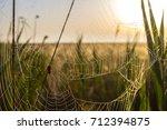 beautiful spider web in dew...   Shutterstock . vector #712394875