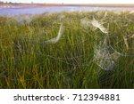 beautiful spider web in dew...   Shutterstock . vector #712394881