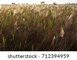 beautiful spider web in dew...   Shutterstock . vector #712394959