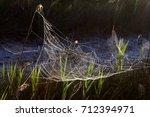 beautiful spider web in dew...   Shutterstock . vector #712394971
