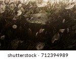 beautiful spider web in dew...   Shutterstock . vector #712394989