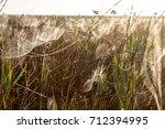 beautiful spider web in dew...   Shutterstock . vector #712394995