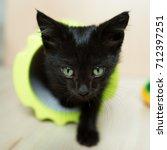 Stock photo the black kitten 712397251