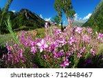 alpine meadow | Shutterstock . vector #712448467