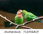 Small photo of yellow-naped amazon parrots Amazonia National Park in the territory of Itaituba municipality in the state of Para near the borders of the state of Amazonas.