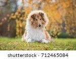 Rough Collie Dog In Autumn