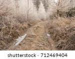 Path Through Frozen Forest Wit...