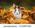 Stock photo little funny rabbit sitting in a pile of leaves in autumn 712487491
