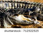 Small photo of basking Nile crocodile