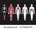 different systems of human body ... | Shutterstock .eps vector #712581079