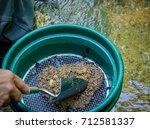 gold panning and gem mining. ...   Shutterstock . vector #712581337