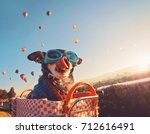 an adorable chihuahua in a... | Shutterstock . vector #712616491