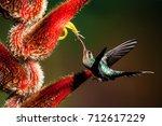 green hermit hummingbird... | Shutterstock . vector #712617229