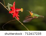 mountain gem hummingbird with... | Shutterstock . vector #712617235