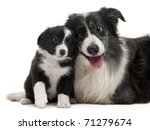 Border Collies Interacting In...