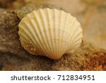 background with shell seashells ... | Shutterstock . vector #712834951