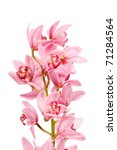 orchid isolated on white... | Shutterstock . vector #71284564