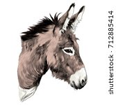 Donkey Sketch Vector Graphics...