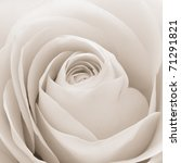 Stock photo close up of white rose petals 71291821