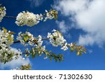 Branch With White Flowers