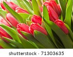 bouquet of red tulips | Shutterstock . vector #71303635