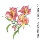 watercolor botanical... | Shutterstock . vector #713053777