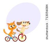 Cute Little Dog And Cat  Kitten ...
