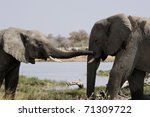 Pair Of Elephants On The Bank...