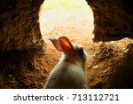 Stock photo rabbit house 713112721