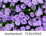 Purple Cutter Flower