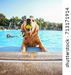 a cute dog playing at a public... | Shutterstock . vector #713171914