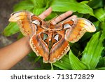 one of the largest butterfly in ... | Shutterstock . vector #713172829