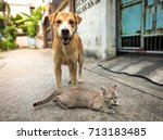Cat And Dog Friend Forever