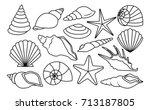 vector set of different shells...   Shutterstock .eps vector #713187805