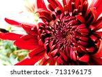vermilion flower