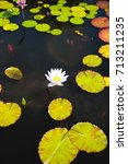 water lily pond | Shutterstock . vector #713211235