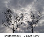 Silhouette Of Two Dead Trees...