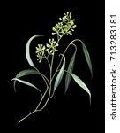 elegant eucalyptus branch with... | Shutterstock . vector #713283181