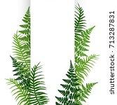 fern frond frame vector...   Shutterstock .eps vector #713287831