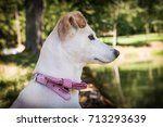 Small photo of Dog with pink bow