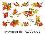 Set Of Branches With Leaves An...