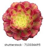 Aeonium Arboreum Variegata...
