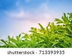 green fresh leaves with bright...   Shutterstock . vector #713393935