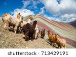 llamas looking to the rainbow... | Shutterstock . vector #713429191