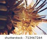hindu penjor in ubud in bali in ... | Shutterstock . vector #713467264