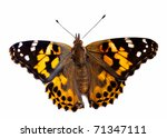 Painted Lady Butterfly On White ...