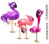 three funny flamingo isolated...   Shutterstock .eps vector #713504059