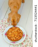 dog and cake | Shutterstock . vector #713524441