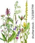 watercolor drawing wild plants... | Shutterstock . vector #713589799