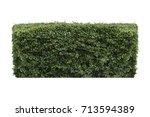 green bush isolated on white... | Shutterstock . vector #713594389